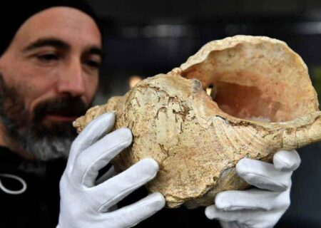 کشف صدف ۱۸ هزار ساله که ساز بادی بوده است!