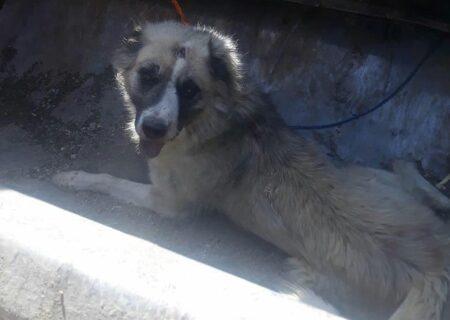 واکنش هنرمندان به سگ کشی تبریز